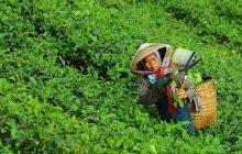 1/3 מהחקלאים בעולם אימצו פרקטיקה אורגנית, האם זה פגע בתוצרת החקלאית?