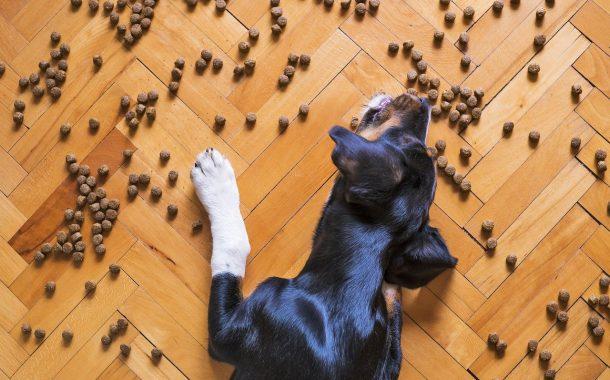 כלב בריא זה כלב שמח - מדריך בנושא מזון לכלבים